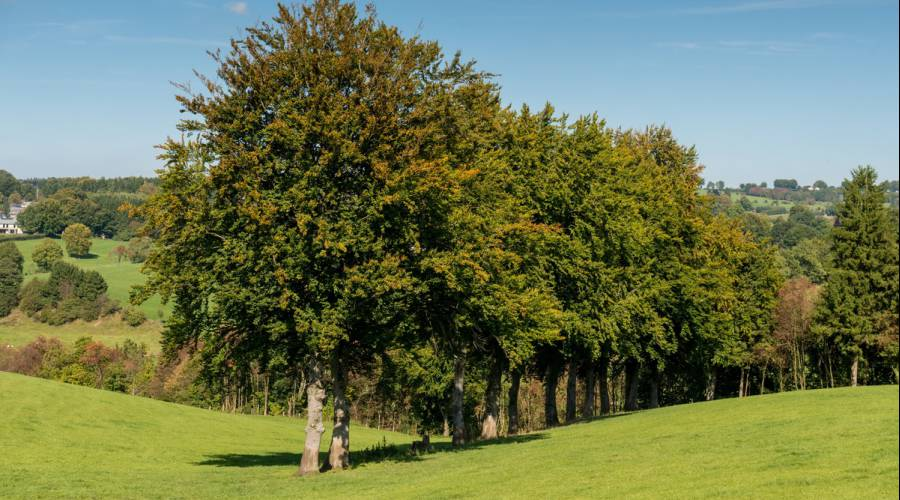 Foto: Bild: eastbelgium.com, Tourismusagentur Ostbelgien