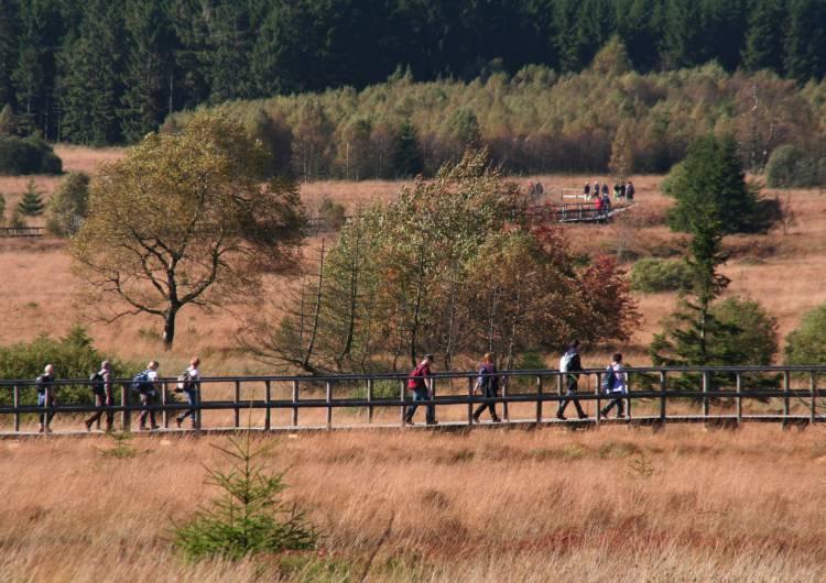 hohes venn wandern fagne de polleur 04 c eastbelgium.com