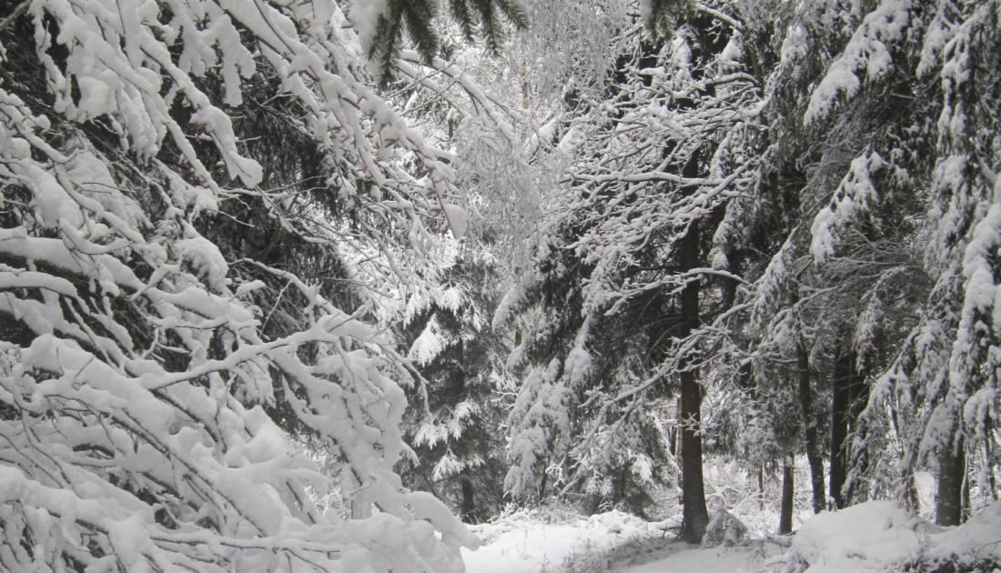 skizentrum schoenberg aktiv 05 c ostbelgien.eu