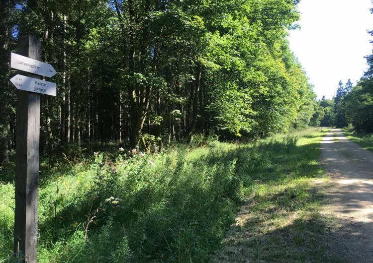 rueckweg buchholz losheimergraben